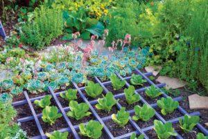 Basics of Organic Gardening