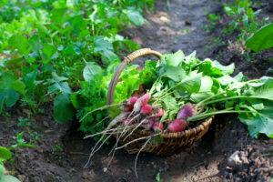 Elements of Organic Gardening