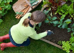 Facts about Organic Gardening