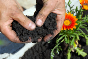 Organic Gardening Significance of Soil Food Web