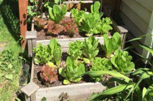 Sustainable Organic Gardening
