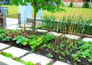 Tips on Organic Gardening