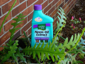 Using Neem Oil in Organic Gardening
