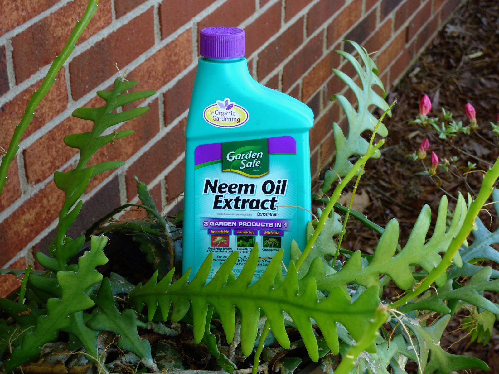 Neem Cake And Oil