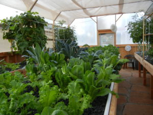 Using aquaponics in organic gardening