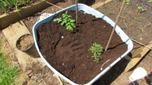 Fertilizer and Topsoil in Organic Gardening